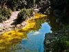 austin-downtown > Pond of the oriental garden of Zilker park in Austin, Texas