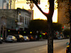 austin-downtown > Tree in the Sunset in Sixth Street, Austin Texas