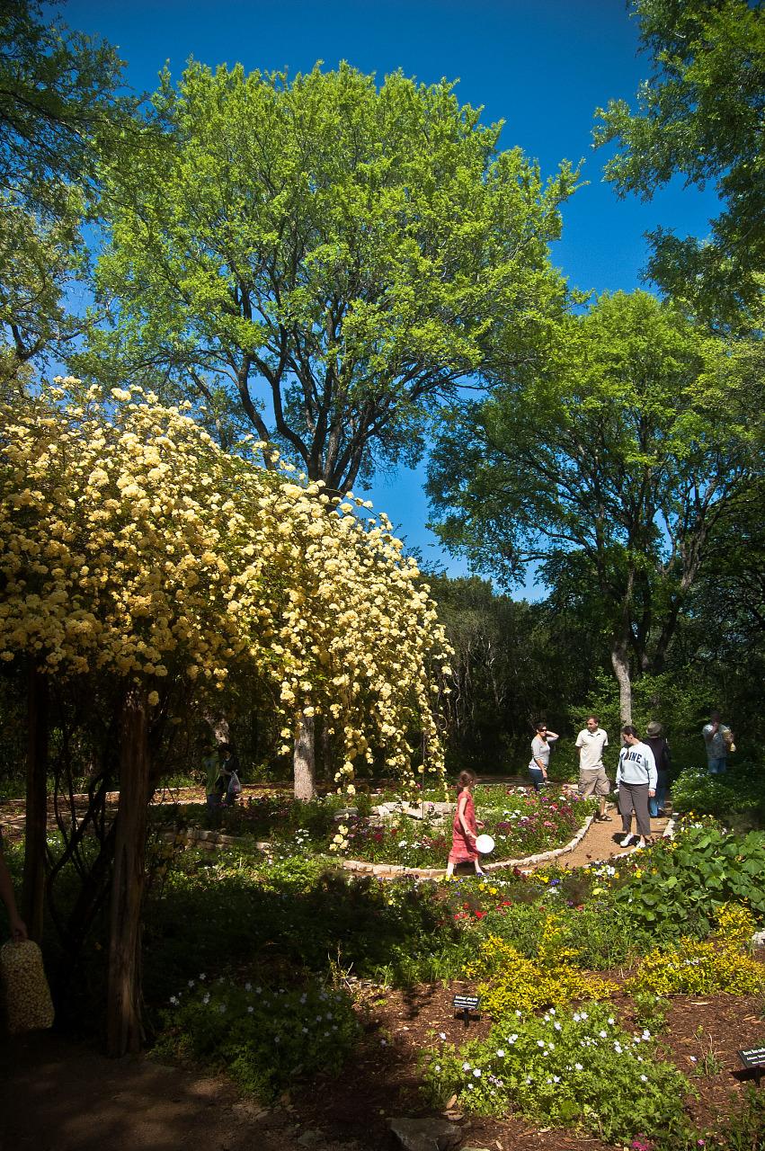 Flower beds of the botanical garden of Zilker park in