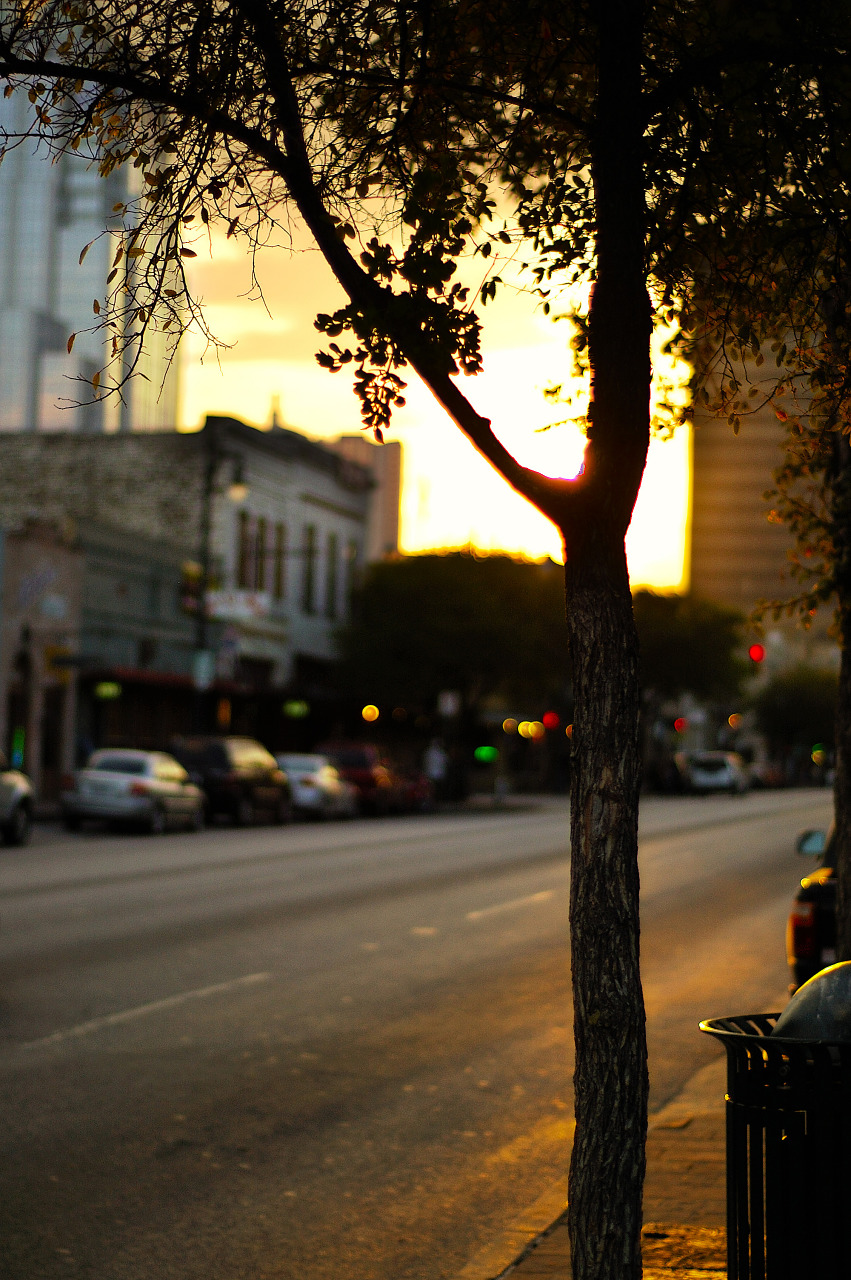 Tree in the Sunset in Sixth Street, Austin Texas