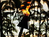 big-island-hawaii > Close up of a dancing flame on a torch in front of palm trees at Sunset - Waikoloa