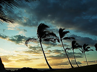 big-island-hawaii > Palmtrees and the Ocean on the Waikoloa golf course at Sunset