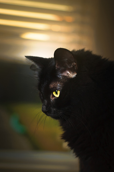 Profile of our cat with yellow eye
