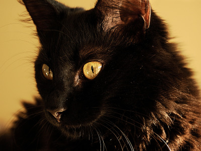 black-cute-cat > Cat face with yellow eyes