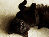 black-cute-cat > Cat rolling on its back