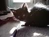 black-cute-cat > Kitten in contra light