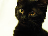 black-cute-cat &gt; Cat&#039;s precious face
