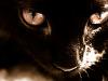 black-cute-cat > Those eyes - Black cat
