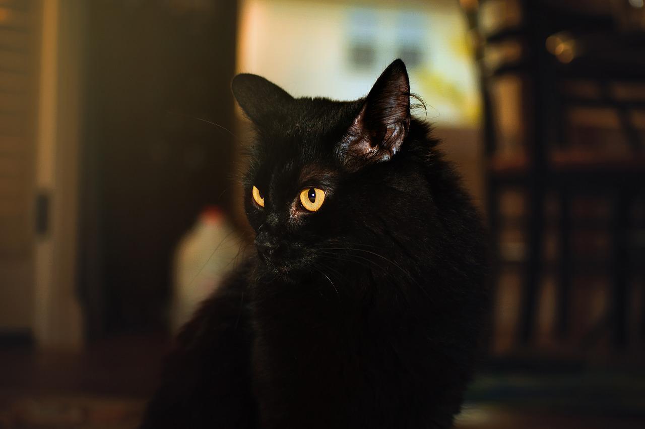 Black cat yellow eyes on Moorlynch ave