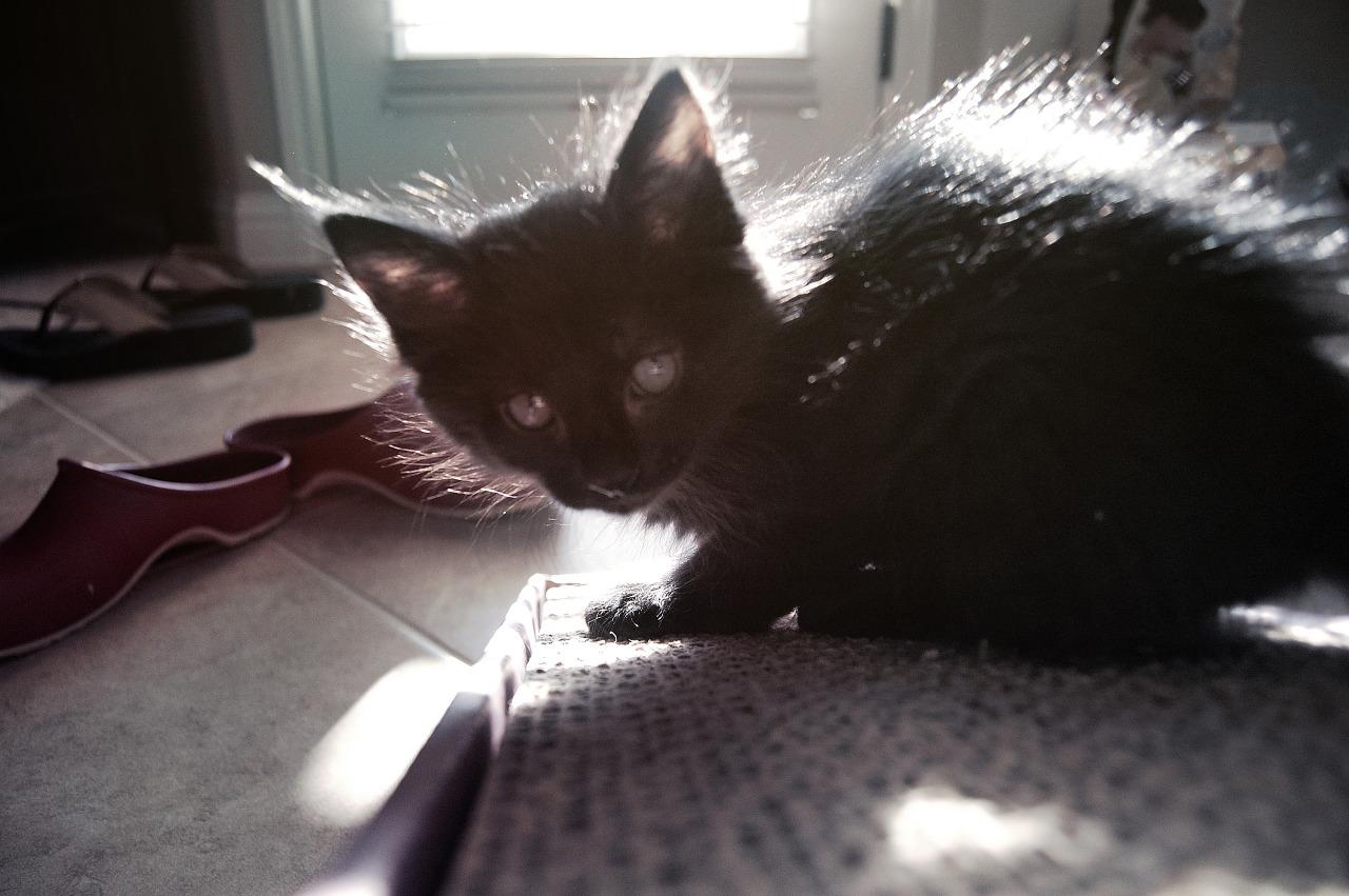 Kitten in contra light