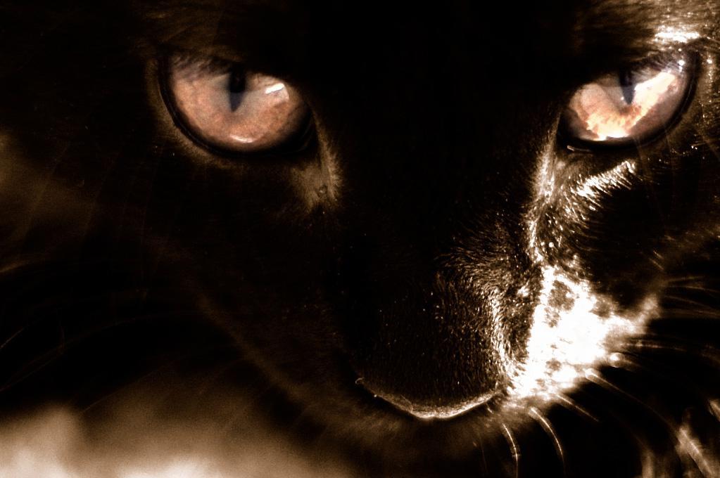 Those eyes - Black cat