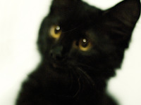 black-cute-cat > Blurry pretty fun face of our cat