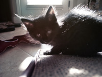 black-cute-cat > Kitten in contra light