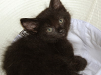 black-cute-cat > Very young kitten in hat