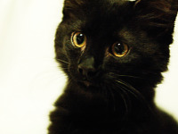 black-cute-cat > Cat's precious face