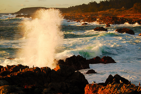 carmel-monterey  &gt; Geyser at Point Lobos, California