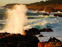 carmel-monterey > Geyser at Point Lobos, California