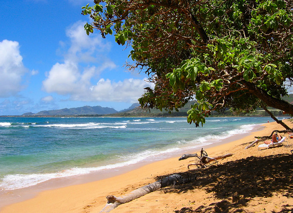 Trees and coastline on the beach of Kauai