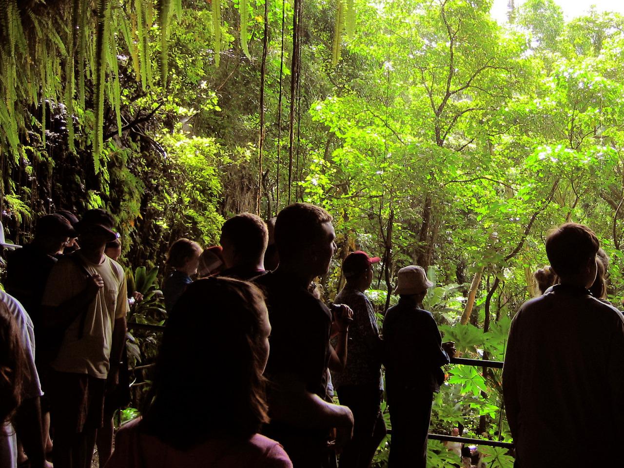 The fern grotto of Wailua in Kauai, Hawaii