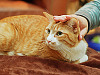 pflugerville-texas > Cat being pet at Australian Day