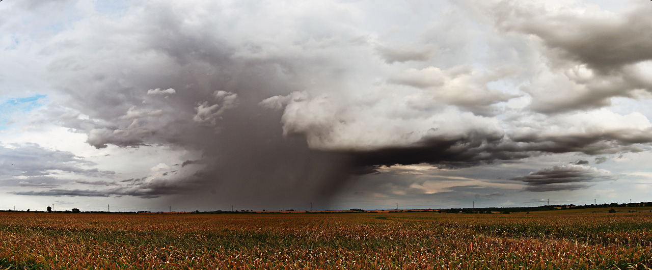Rain storm on the corn field in Pflugerville