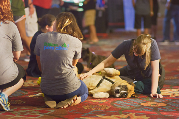 Dallas Pets Alive charity with friendly dog on Quakecon showfloor