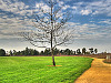 silicon-valley-usa &gt; Lonely tree in Bayland Park