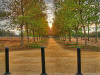 silicon-valley-usa > Alley of trees in Bayland Park at sunset