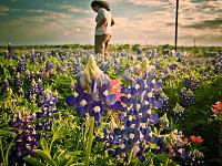 texas-flowers > Woman standing in the field of bluebonnet