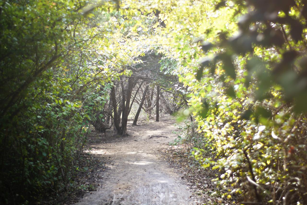 Trail Arch