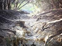walnut-creek-park-austin > Broken Path