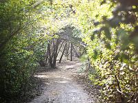walnut-creek-park-austin > Trail Arch