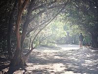 walnut-creek-park-austin > Park Trail