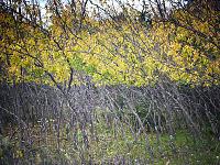 walnut-creek-park-austin > Yellow Leaves