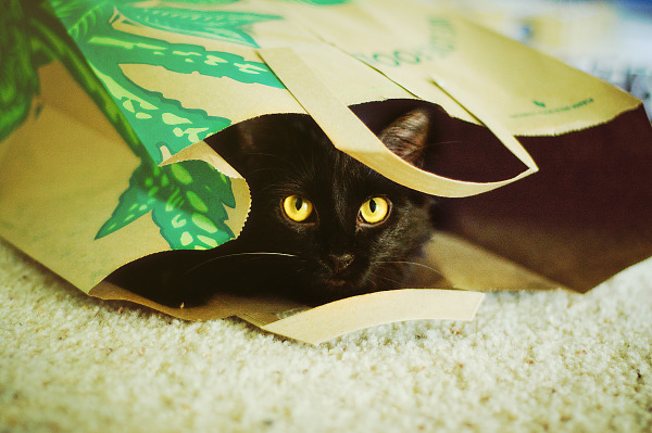 Weezie the black cat under paper bag