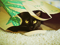 weezie-willow-cats > Weezie the black cat under paper bag