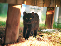 weezie-willow-cats > Weezie the black cat is strolling under the wood panel